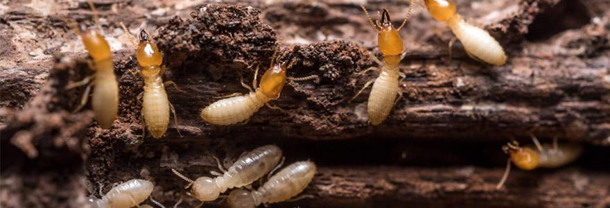 existe t il un traitement naturel contre les termites. Black Bedroom Furniture Sets. Home Design Ideas
